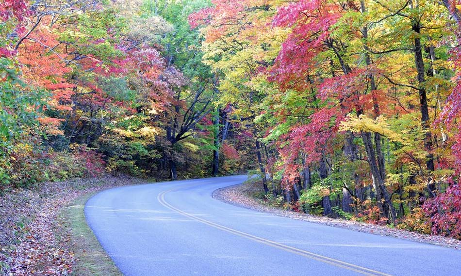 A winding road surrounded by trees.