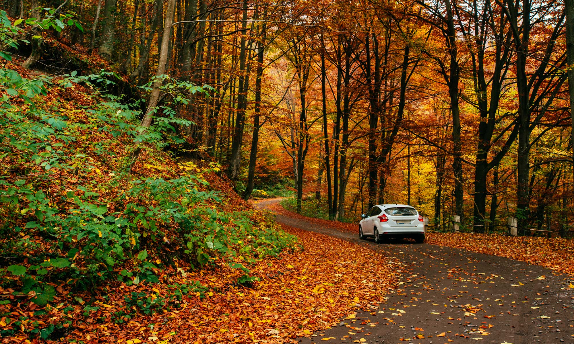 A car driving in the fall.