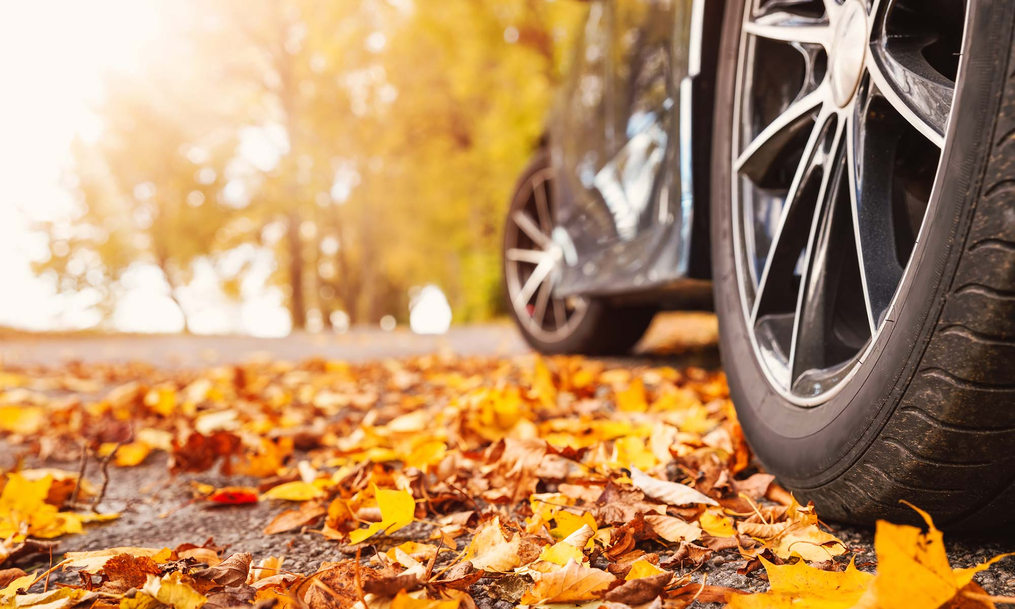A close up image of a car's tires on a road covered with leaves.